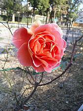 20100103_01.jpg