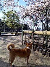 20100410_02.jpg