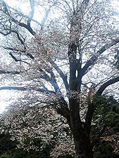 20100410_05.jpg